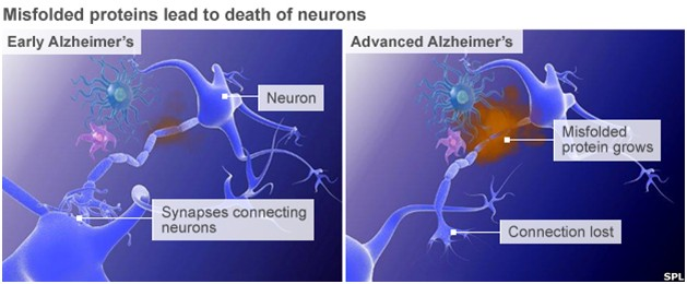 neuronlar